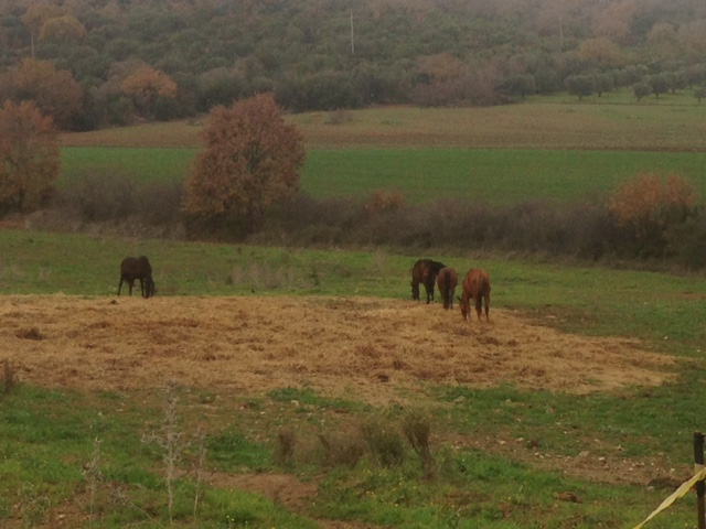 Go horseback riding in the tuscan coastal town Maremma. Plan your vacation with Barbara Lessona