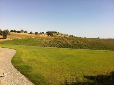 BL-Wine-Tasting-Tours-Italy-6