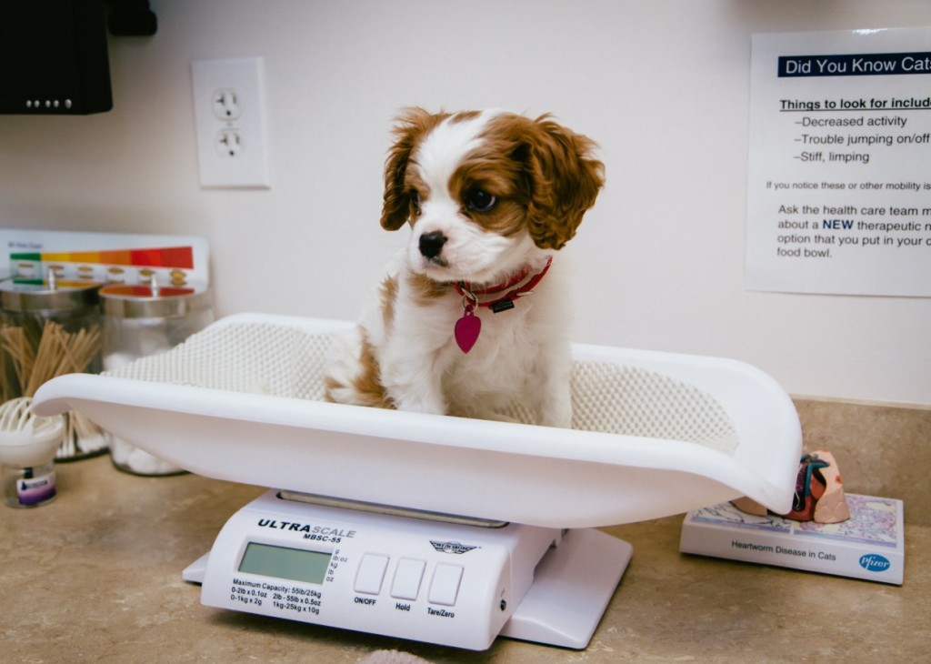 16-pets-going-to-vets-1024x730