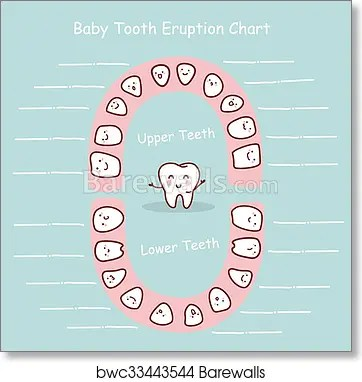 Art Print of Baby tooth chart record Barewalls Posters  Prints