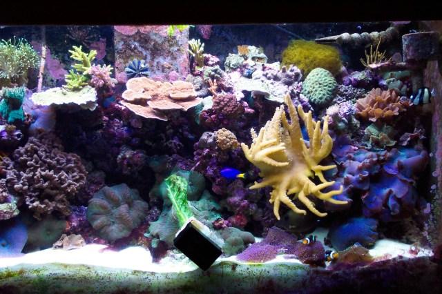 23724d1123702916 saltwater aquariums aquarium3[1]