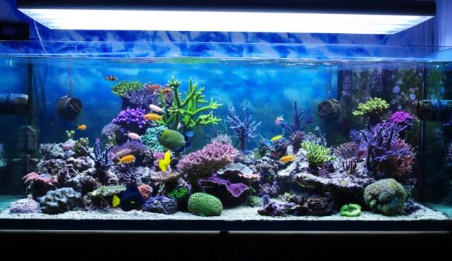 Aquarium corals reef[1]