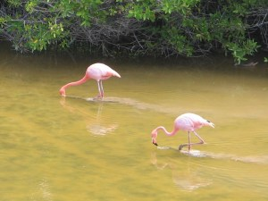 IMG_1605_Flamingos