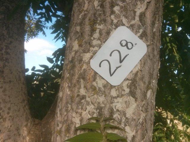 עץ מספר 228