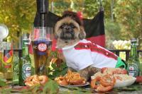 Alpine Boy Lederhosen Dog Costume   BaxterBoo