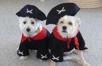 Caribbean Pirate Dog Costume | BaxterBoo
