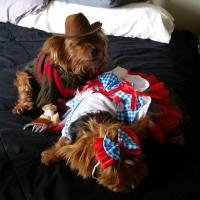 Freddy Krueger Dog Costume | BaxterBoo
