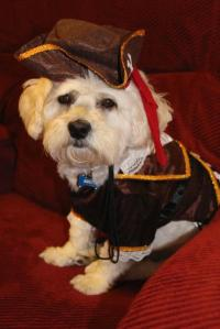 Pirate Captain Halloween Dog Costume | BaxterBoo