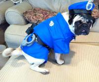 Police Dog Halloween Costume | BaxterBoo