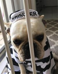 Prisoner Dog Halloween Costume by Casual Canine | BaxterBoo