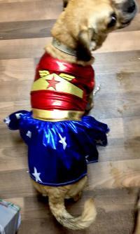 Wonder Woman Dog Halloween Costume | BaxterBoo