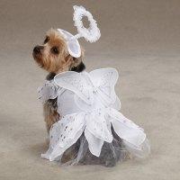Angel Paws Halloween Dog Costume | BaxterBoo