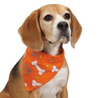 Aria Trick or Treat Dog Bandana - Orange | BaxterBoo