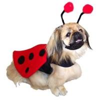 Ladybug Harness Dog Costume | BaxterBoo