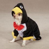 Penguin Pup Dog Halloween Costume | BaxterBoo