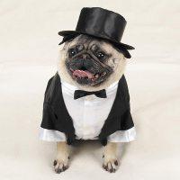 Wedding Groom Tuxedo Dog Halloween Costume by Casual ...