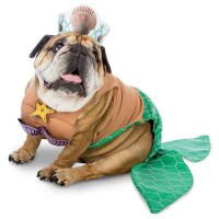 Zelda Mermaid Halloween Dog Costume | BaxterBoo