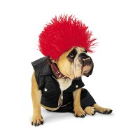 Punk Rock Halloween Dog Costume by Zelda | BaxterBoo