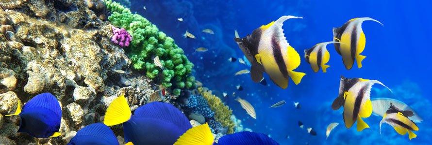 scuba-fish