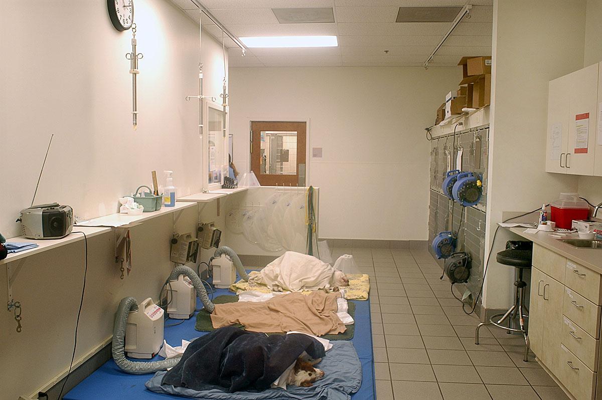 Nice Veterinary Hospital Floor Plans. Small Hospital Floor Plans ...