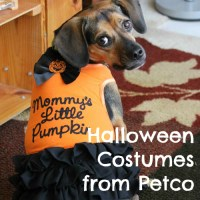 Luna Models Costumes from Petco's Halloween Bootique + GIVEAWAY!