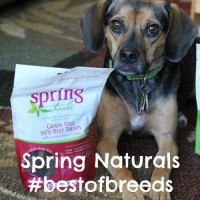 Spring Naturals #BestOfBreeds Features Beagles + GIVEAWAY!