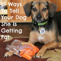 15 Ways To Tell Your Dog She Is Getting Fat