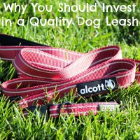 Spend More on Quality Dog Collars & Leashes. Save More Money Overall. + GIVEAWAY!