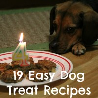 Baking for Special Occasions - 19 Easy Dog Treat Recipes