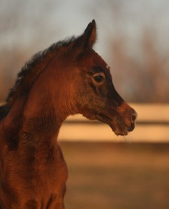 Nebras filly out of Barizza