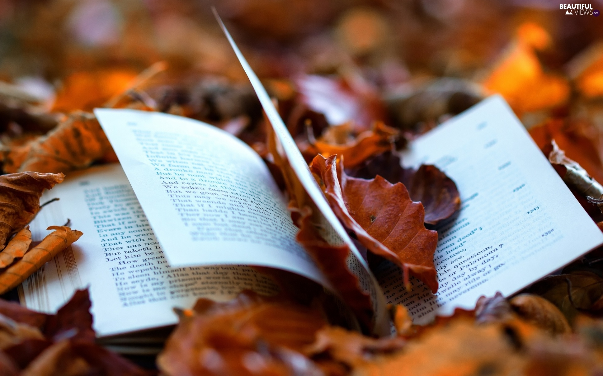 Fall Wallpaper For Tablet Autumn Book Leaf Beautiful Views Wallpapers 1920x1200