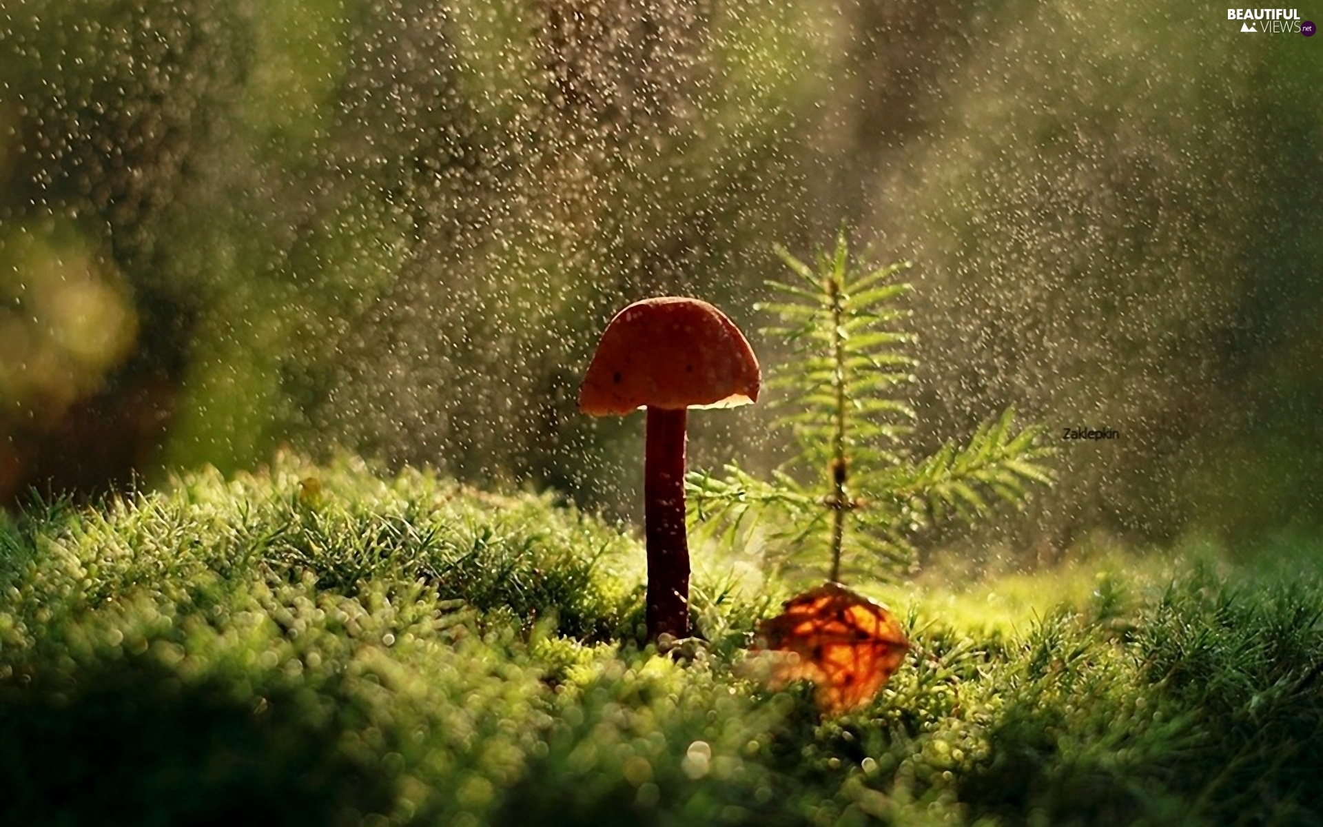 Free Animated Frog Wallpaper Ligh Forest Flash Rain Mushrooms Sun Luminosity