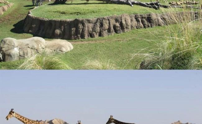 Top Dubai Zoo Jumeirah Views
