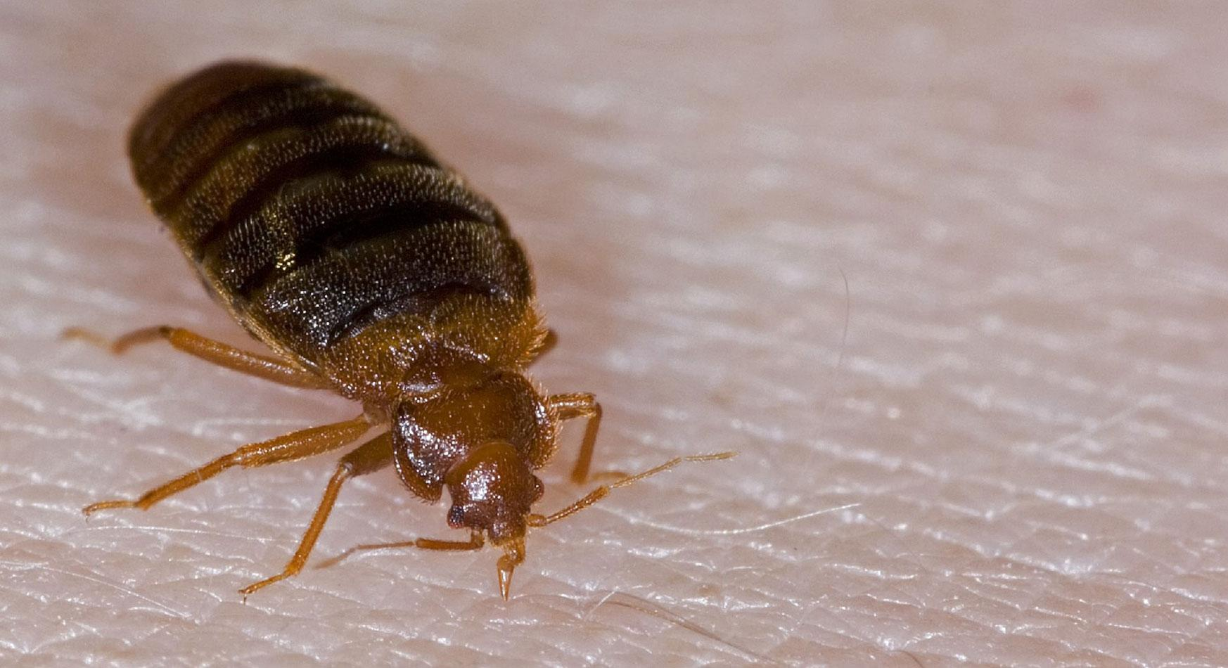 Ways To Get Rid Of Bed Bugs For Good Bed Bug Guide