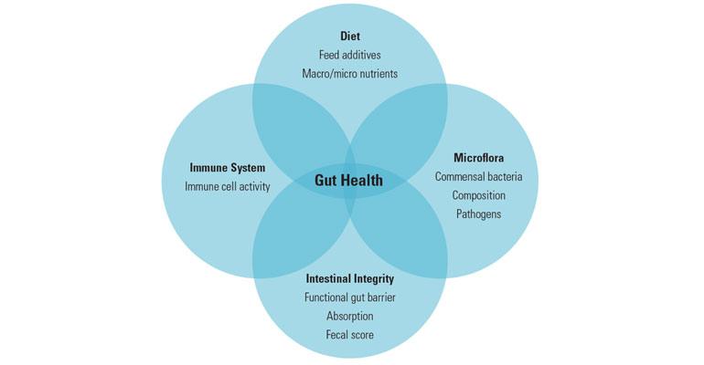 Modulating gut health in ruminants Beef Magazine - health components