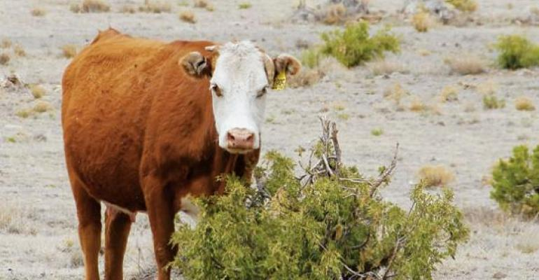 Patience Is The Key In Recovering Drought-Stressed Pasture | Beef Magazine