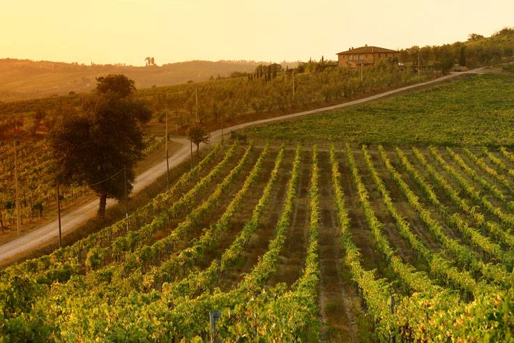 Know Your Spirits: Five Most Expensive Wines