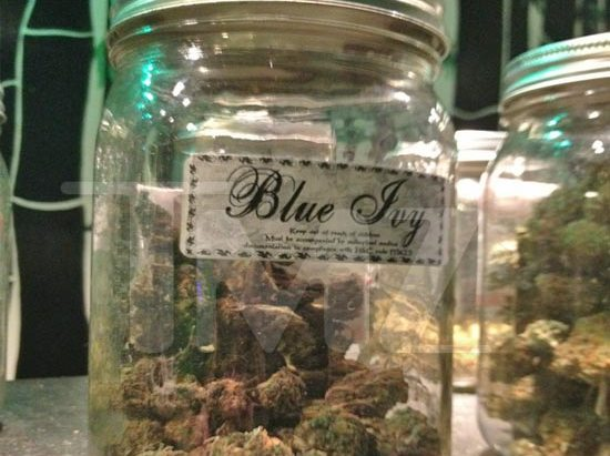 Blue Ivy Marijuana All Over LA Pot Shops