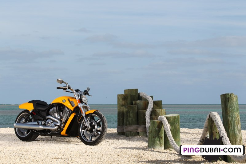 The Trip of Lifetime: Living the Dream with Harley Davidson
