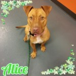Meet Alice!