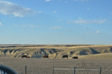 enroute to Drumheller, Alberta. The river valley seems to appear out of no where