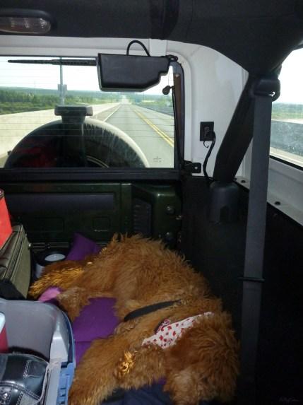 Gracie's first roadtrip