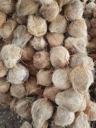 butuh kelapa tua - berdesa