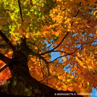 Autumn Photos From All Around