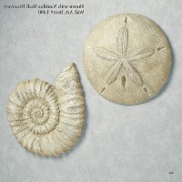 15 Inspirations of Sand Dollar Wall Art