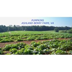 Small Crop Of Ashland Berry Farm