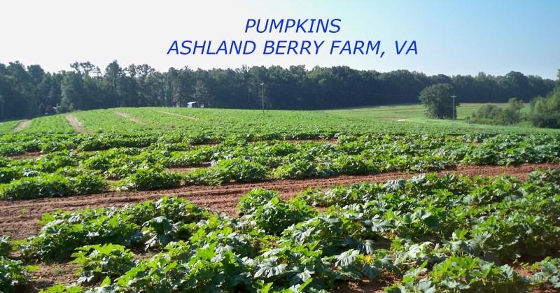 Large Of Ashland Berry Farm