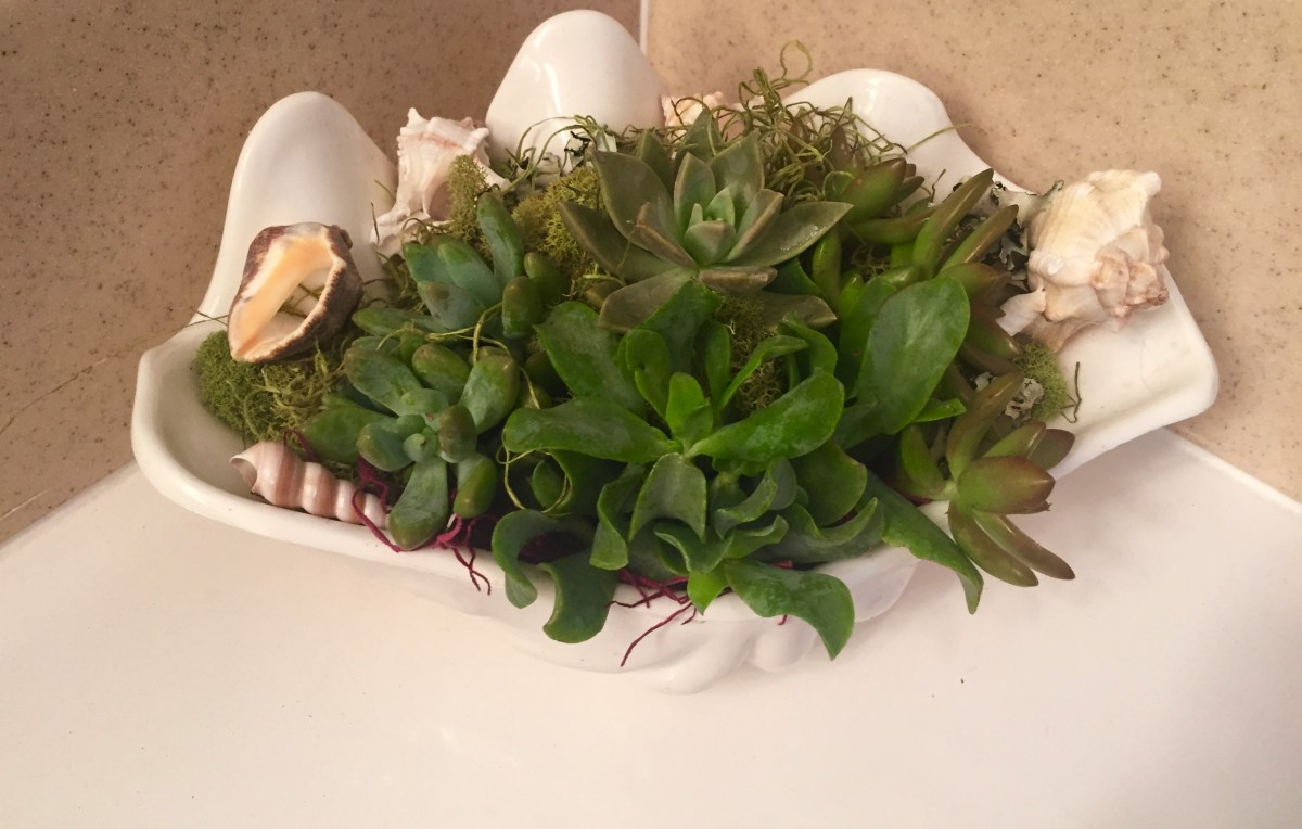 DIY  succulents in a sea shell
