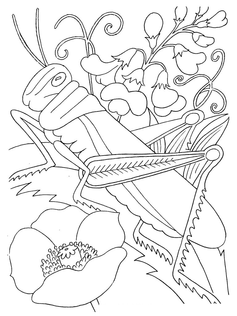 Printable Coloring Pages Insects