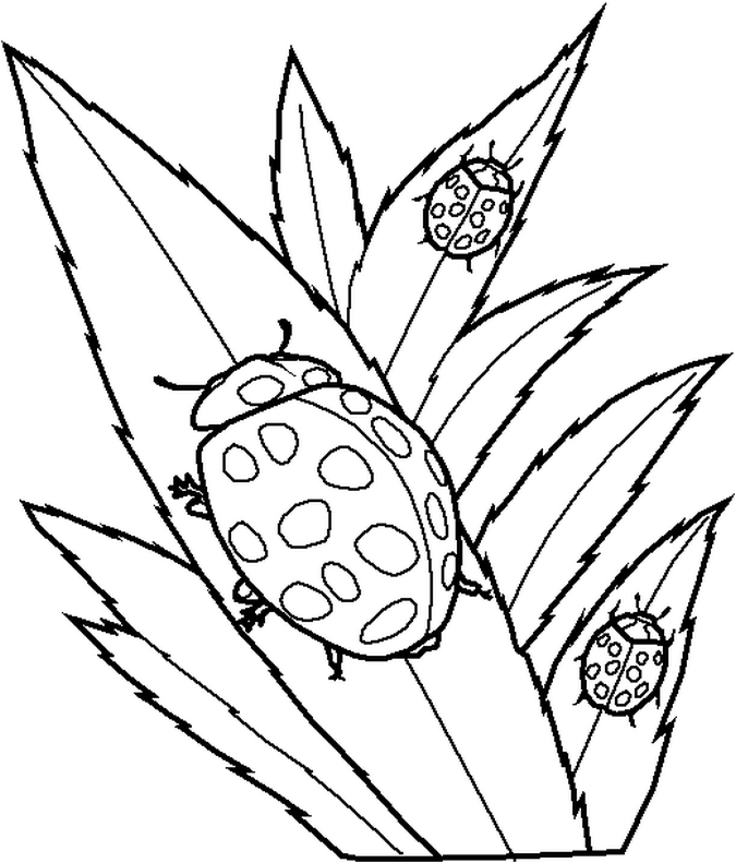 Free Printable Ladybug Coloring Pages For Kids - best of coloring pages with ladybugs
